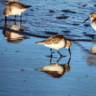 Uccelli in riva al mare