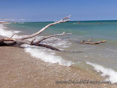 spiaggia libera Lido d i Classe